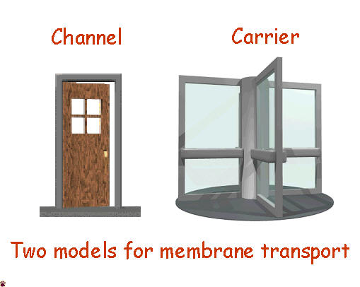 channel - carrier models